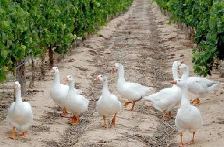 持続可能な農業