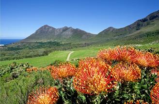 ケープペニンシュラ(Cape Peninsula)地域