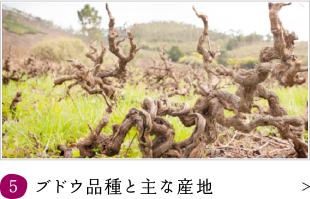 ブドウ品種と主な産地